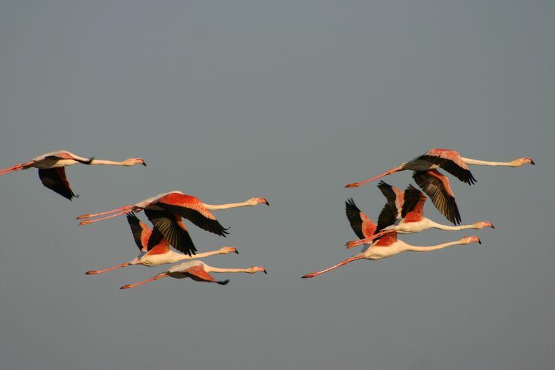oiseaux_13
