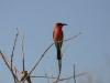 oiseaux_02