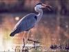 oiseaux_06